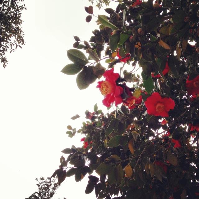 favoriteblooms